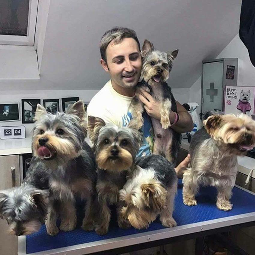 Galerie Foto Salon Infrumusetare Canina Oradea Skiper Frizerie