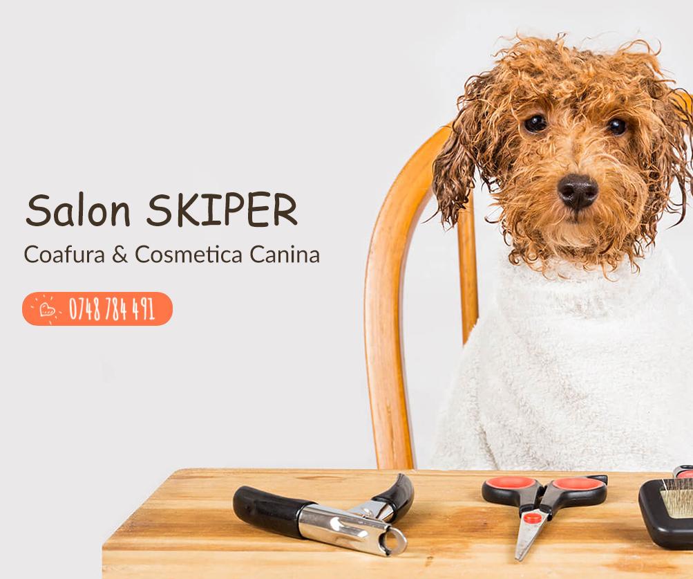 Salon Coafura Canina Skiper Si Frizerie Canina Oradea Cosmetica Canina